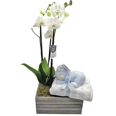 Orquídea nacimiento niño