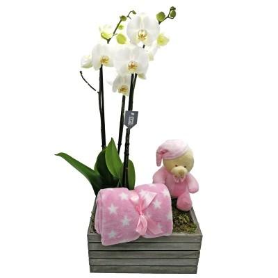 Orquídea nacimiento niña