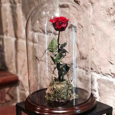 Rosa de la Bella