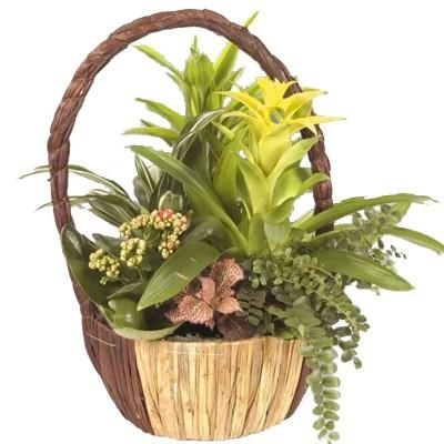 Cesta de plantas Soledo