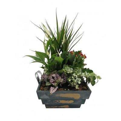 Caja plantas madera oscura